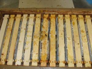 Caisse de cadres de miel avec une pellicule de cire