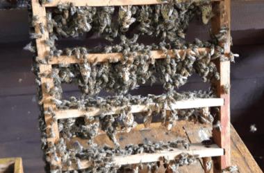 Celullereines ruche Alsacienne traditionnelle.