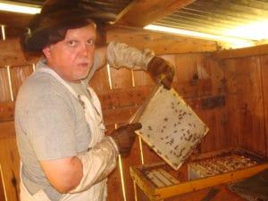 récolte à l'intérieur du rucher