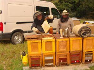 récolte de miel en extérieur